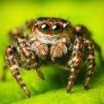 Удивительные факты о пауках