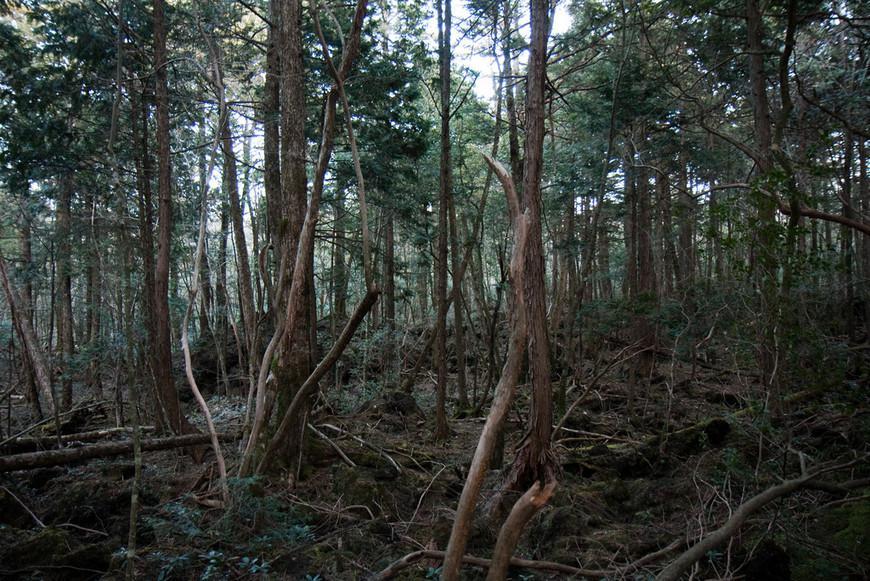 Лес Аокигахара
