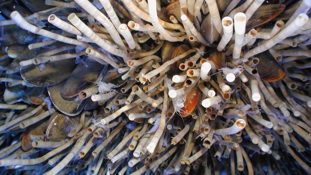 Многощетинковые черви