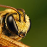 10 самых опасных насекомых на планете