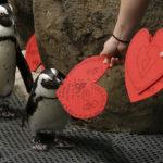 Особенности дня Святого Валентина в разных странах