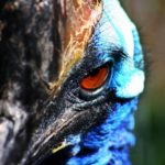 Самые смертоносные животные Австралии