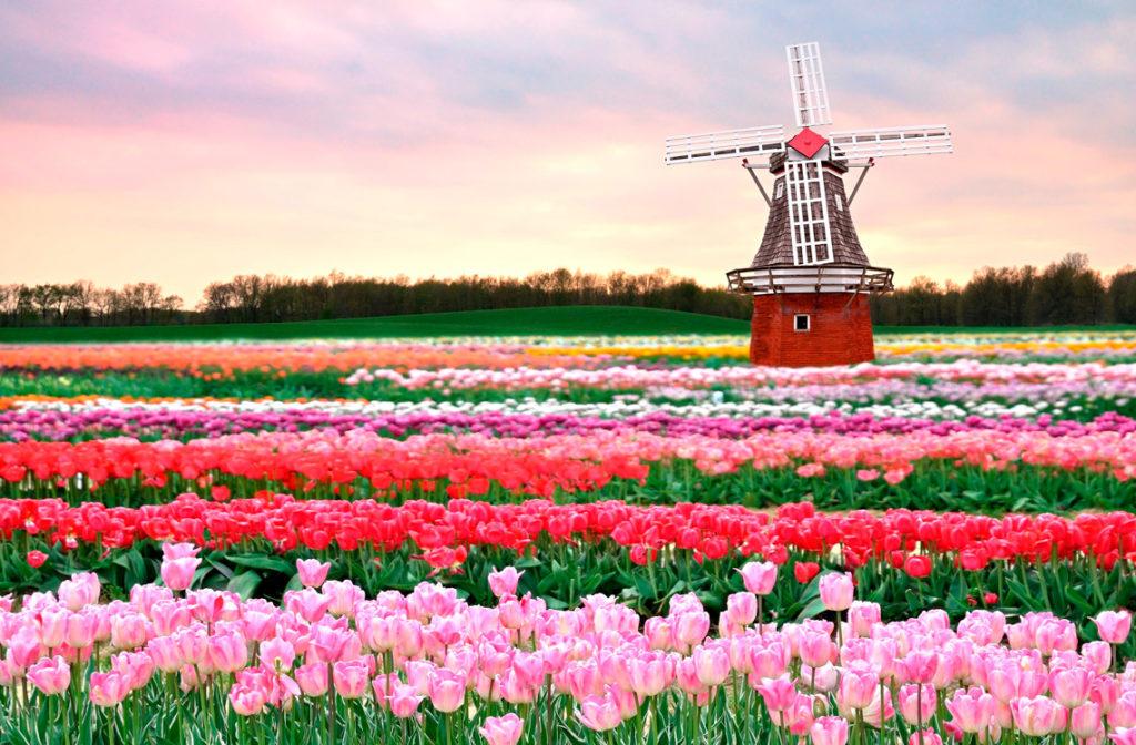 Поля Тюльпанов, Голландия