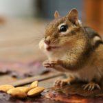 Обжоры в мире животных
