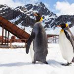 Что увидеть и чем заняться в Антарктиде