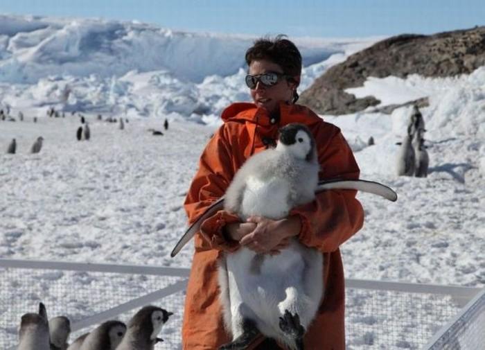 Тот-кто-переворачивает-пингвинов