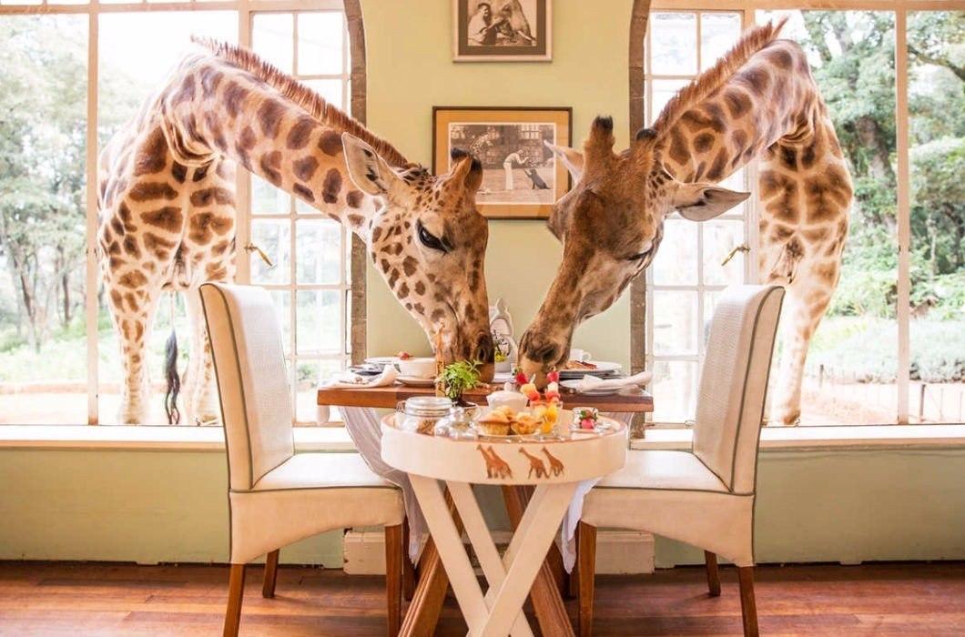 Усадьба Жирафов, Найроби, Кения