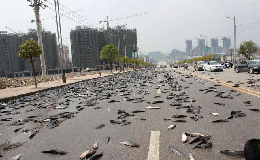 дождь из рыбы