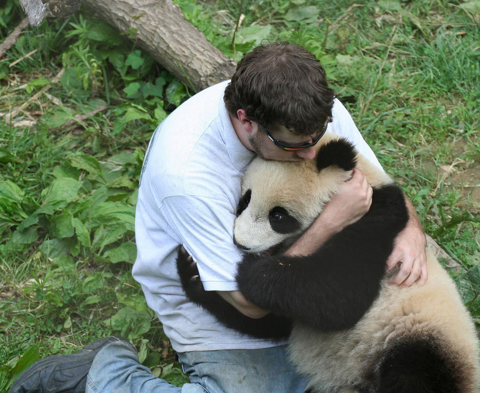 обнимальщик панд