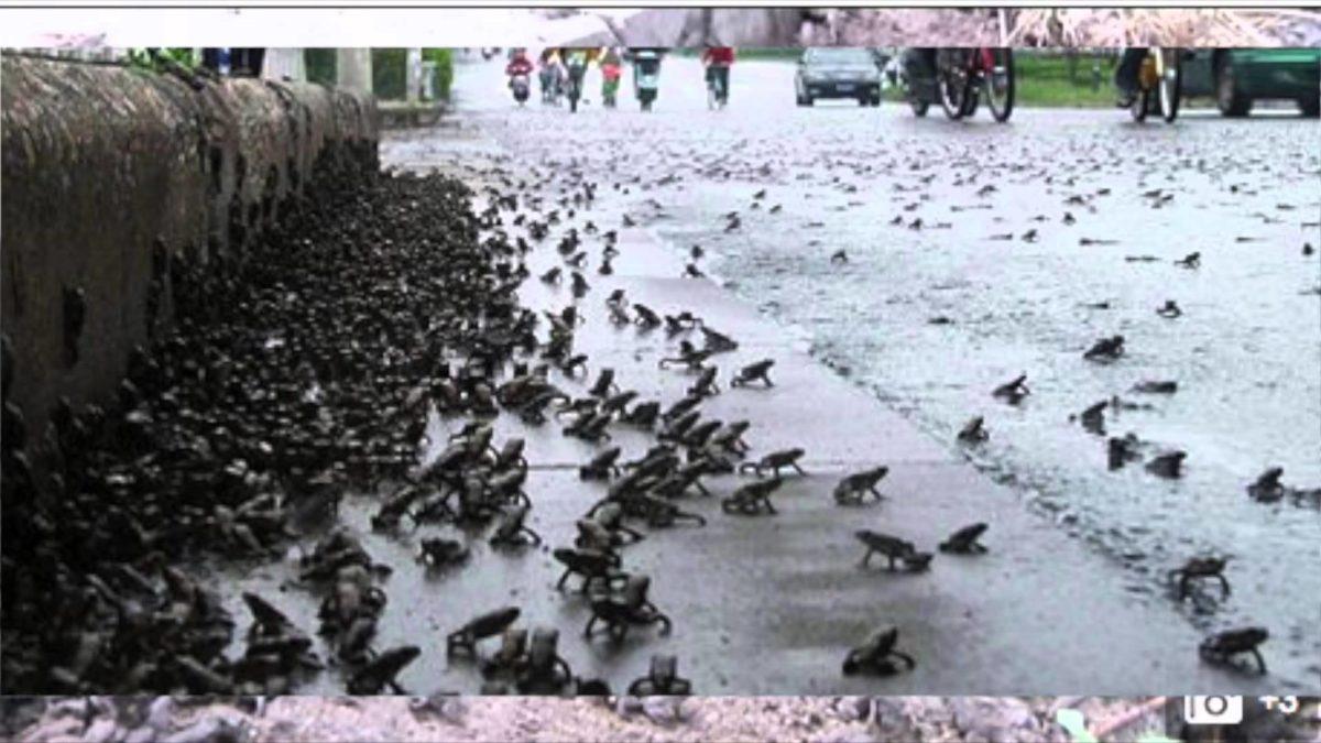 различные виды лягушек и жаб дождь в Лестере