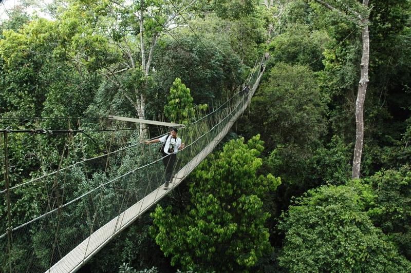 Мост Национального Парка Таман Негара-Малайзия
