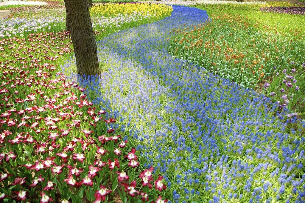 Национальный парк Хитачи в Японии