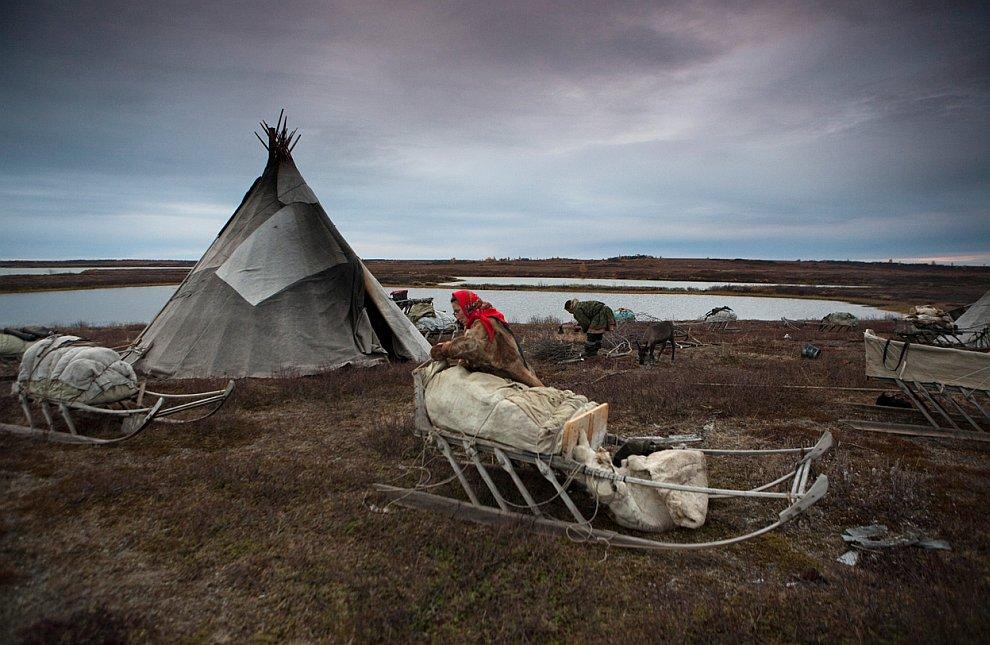 Ненет, Полуостров Ямал, Сибирь