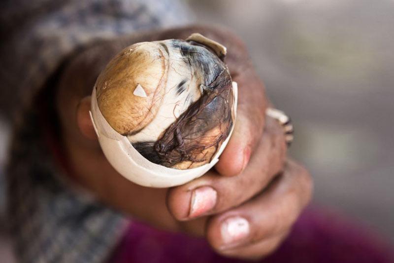 Развивающийся эмбрион утки