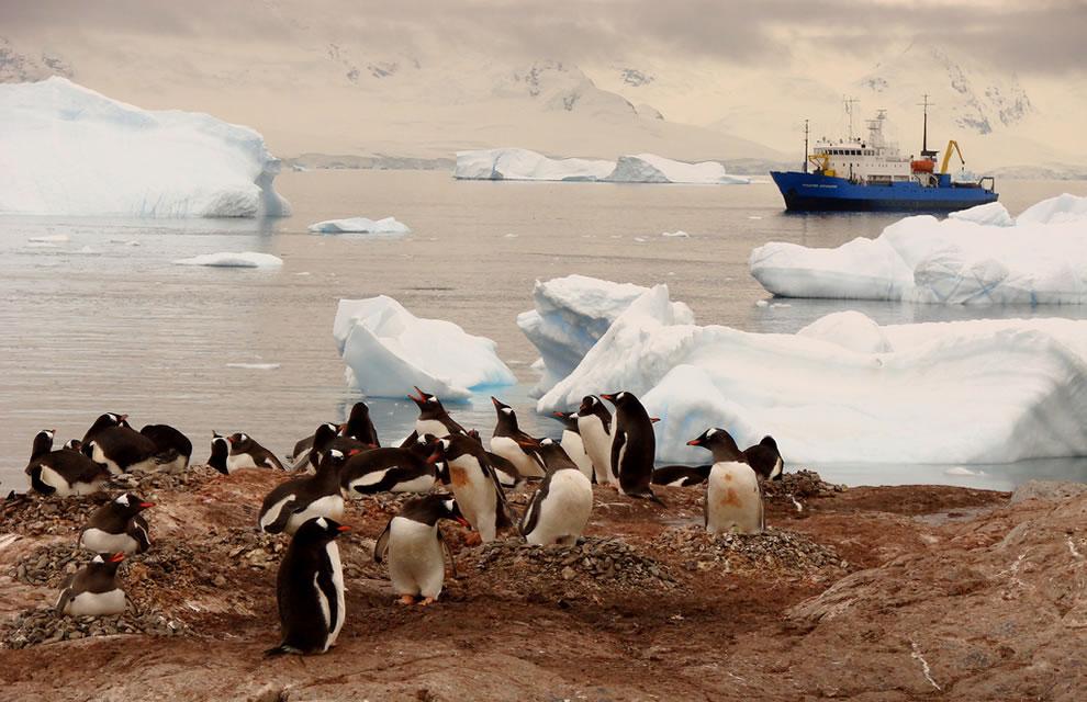 Твой кусочек Антарктиды
