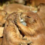 Самые романтичные животные, которые выбирают пару на всю жизнь