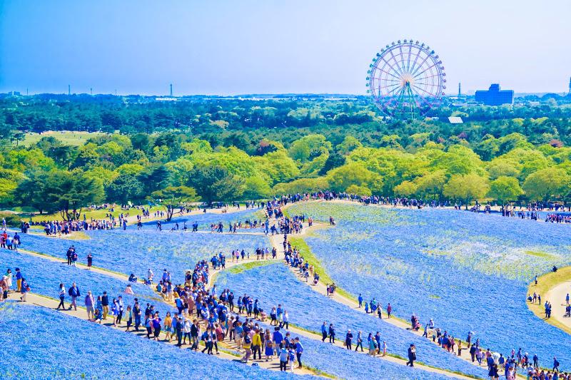 ациональный парк Хитачи в Японии