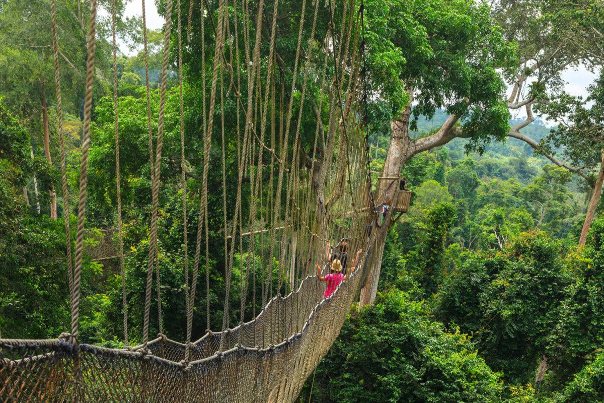 Kakum National Park Canopy Walkway-Гана