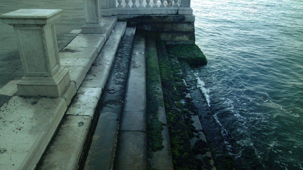 Водоросли Венеция