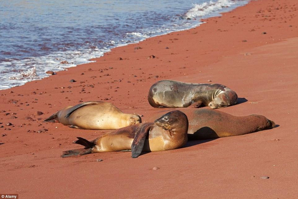 Красный Песчаный Пляж, Рабида, Галапагосские Острова