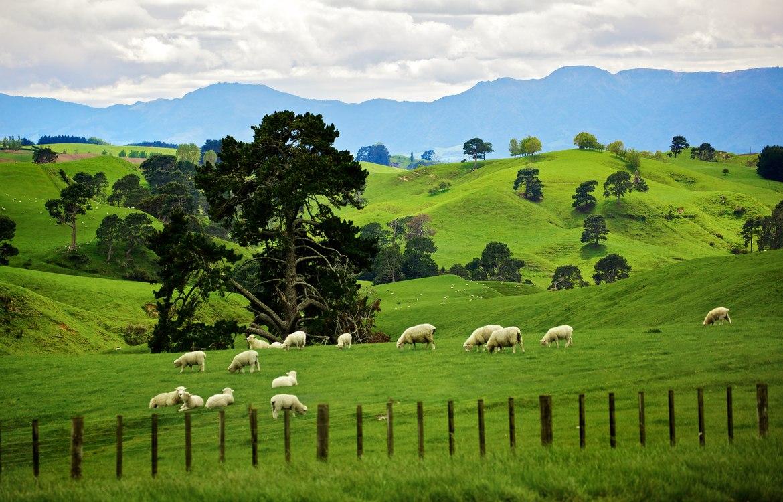 Новая Зеландия, Окленд, Гавань Вайтакере