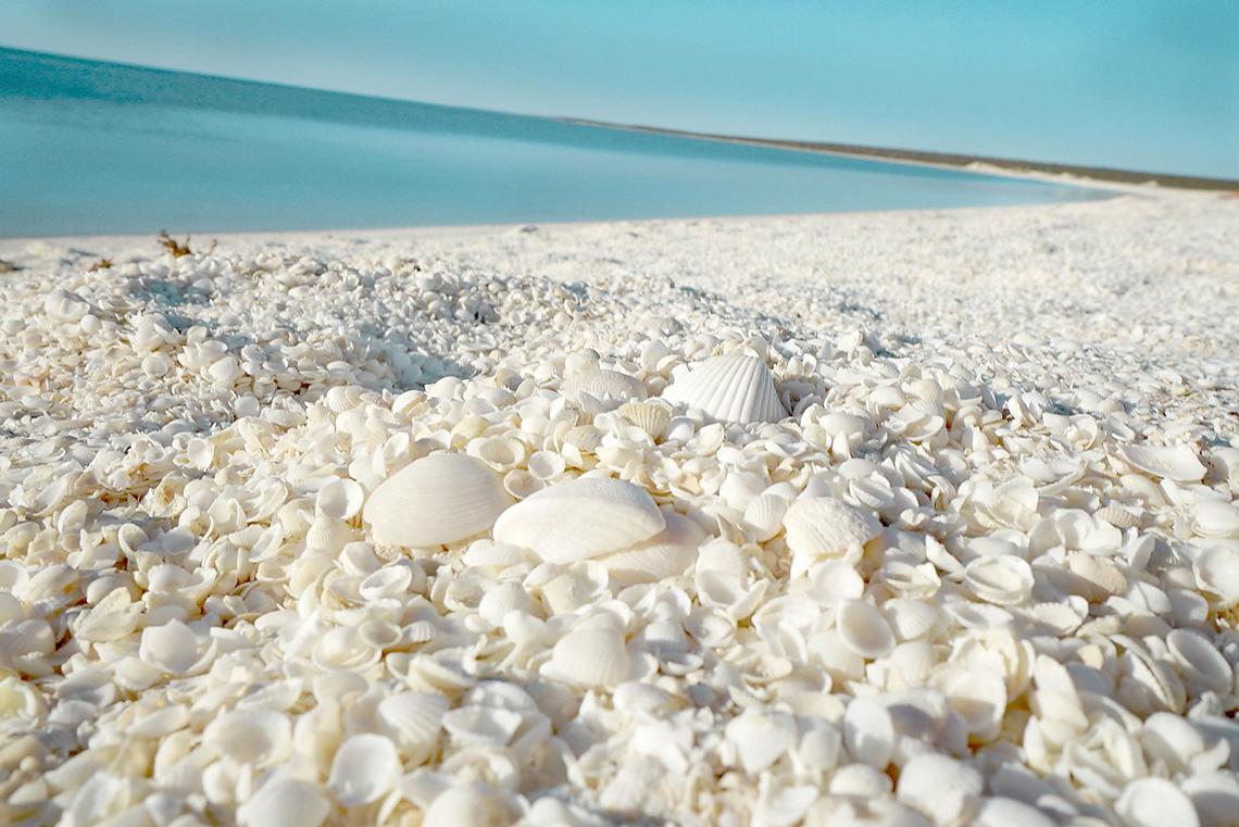 Пляж ракушек, Шарк-Бей, Австралия
