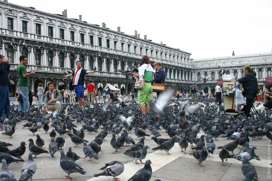 Птицы венеции