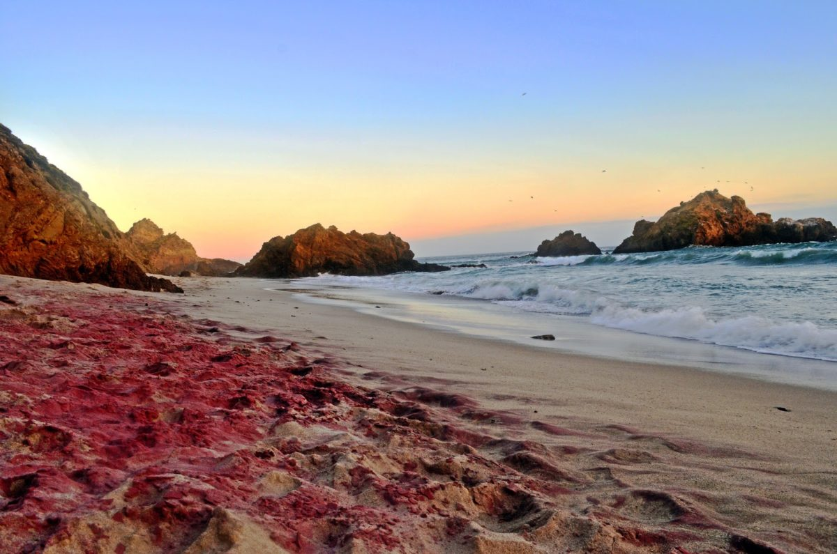 Пурпурный песочный пляж, Калифорния, US