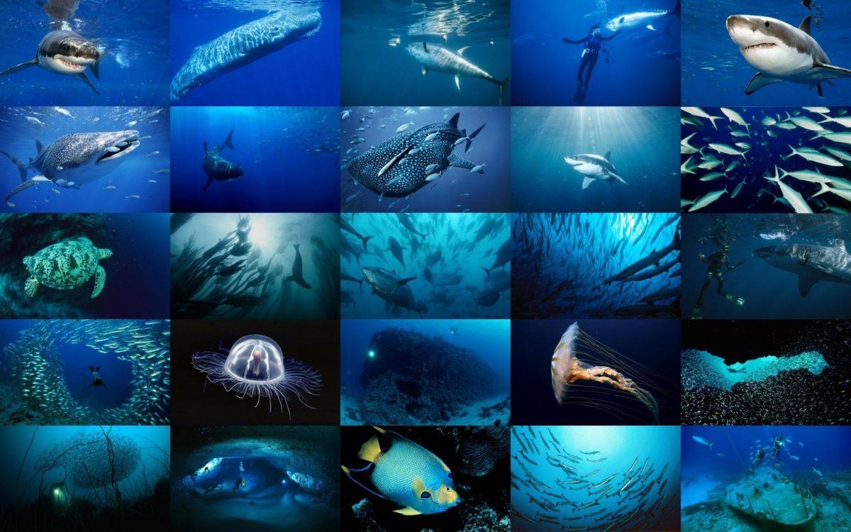 картинки на тему обитатели океана тоже сценарий