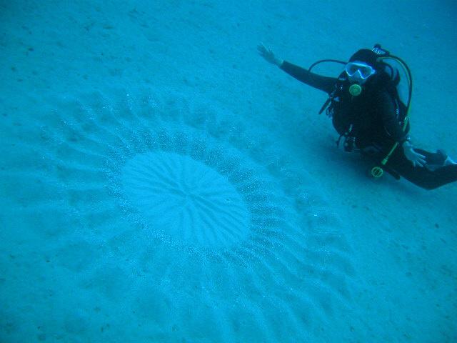 Подводные «круги на полях», Япония
