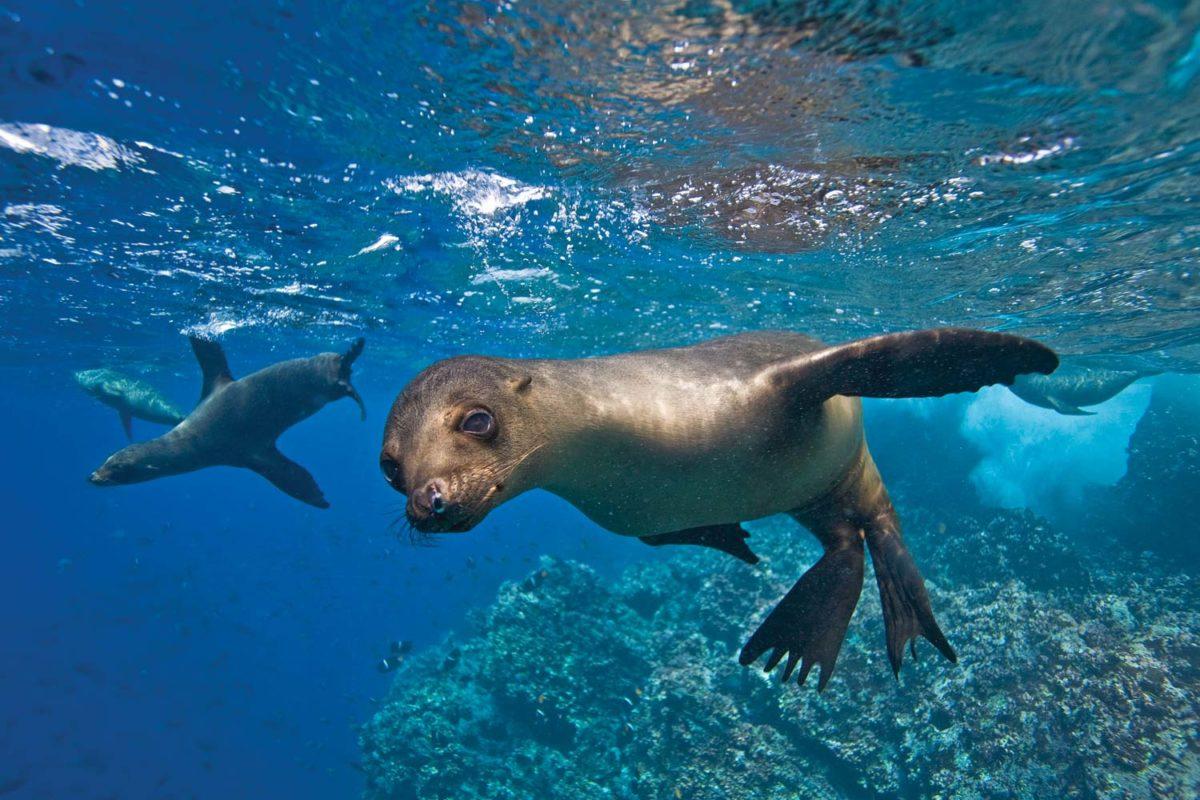 акулы и морские львы Галапагосских островов