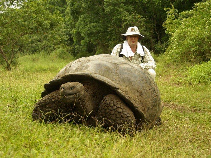 галапагосские черепахи