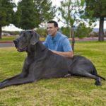 Крупнейшие породы собак в мире