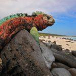 14 Фактов О Галапагосских Островах