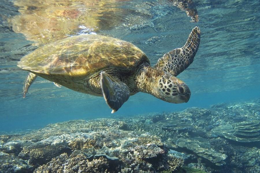 15 Фактов О Галапагосских Островах