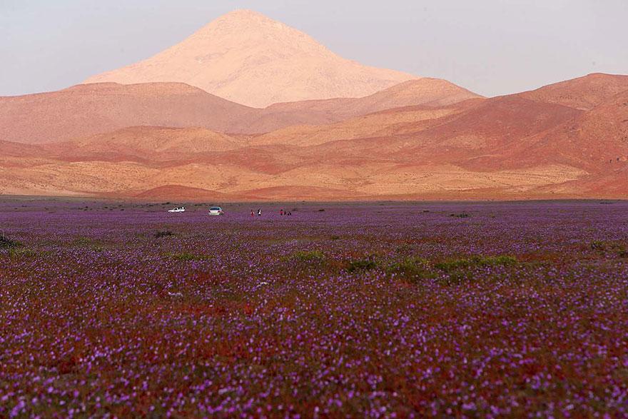пустыня Чили