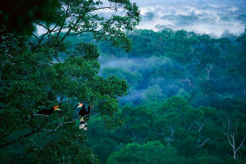 тропические леса Борнео