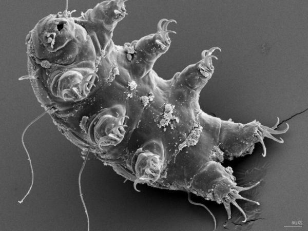 Бактерии-экстремофилы