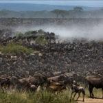 Великая миграция гну