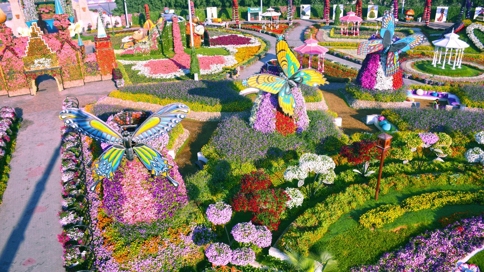 Цветочные Поля - Дубайский Чудо-Сад