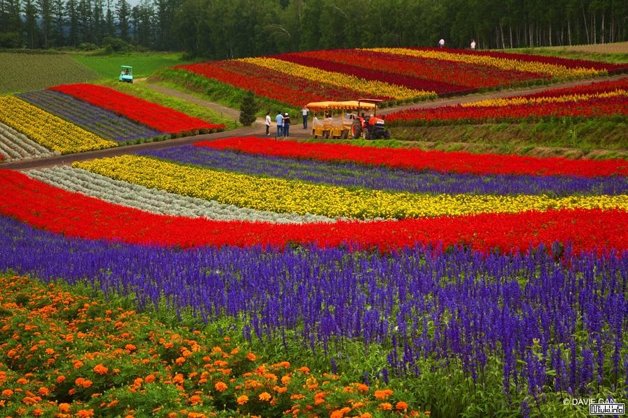 Цветочные Поля Фурано, Хоккайдо-Япония
