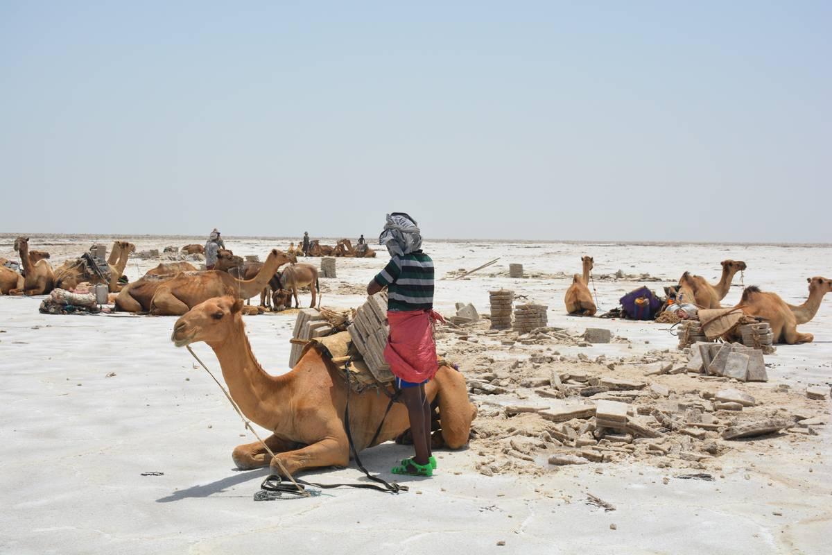 пустыня Данакил добыча соли