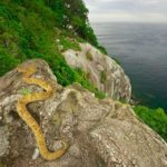 Кеймада-Гранди (Ilha Da Queimada Grande) – самый опасный остров в мире