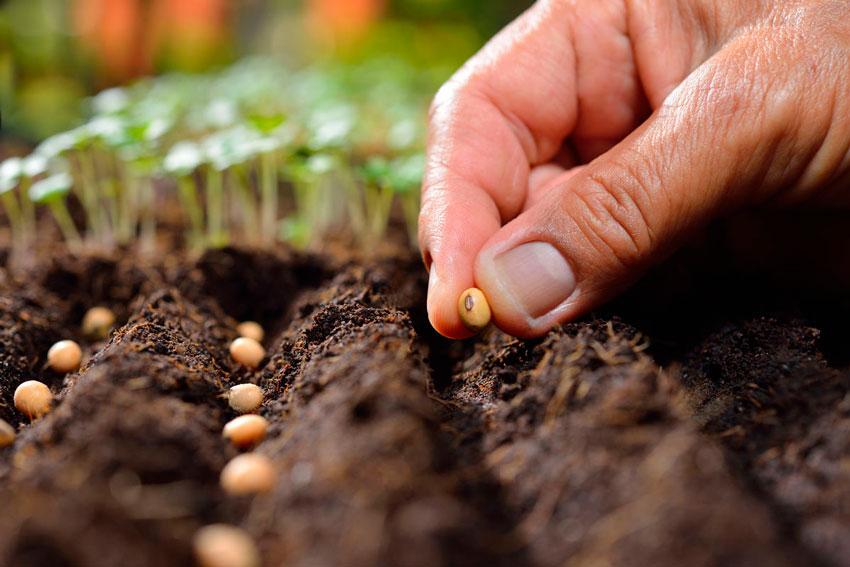Овощи легко посадить самостоятельно