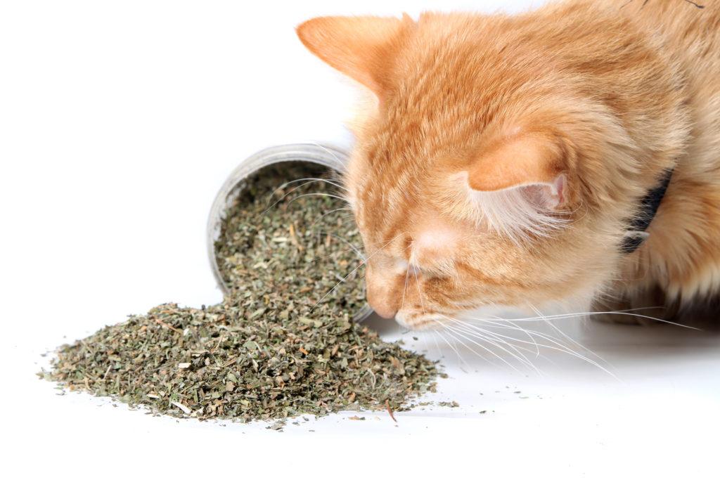 кошка-и-специи