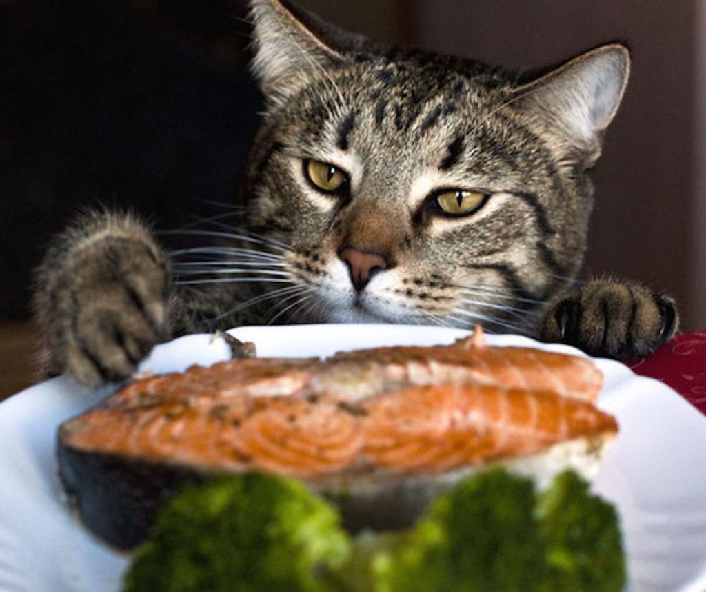 кошка и рыба