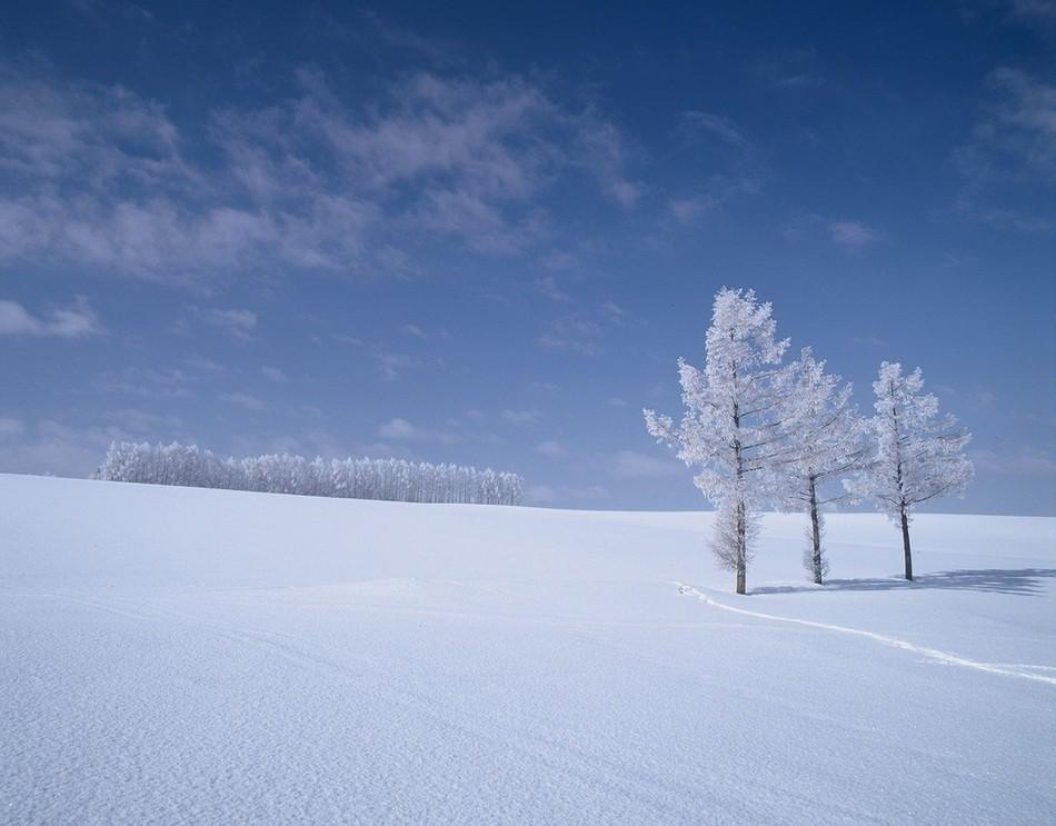 Поле зимой картинка