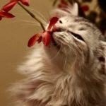 Запахи, которые ненавидят кошки