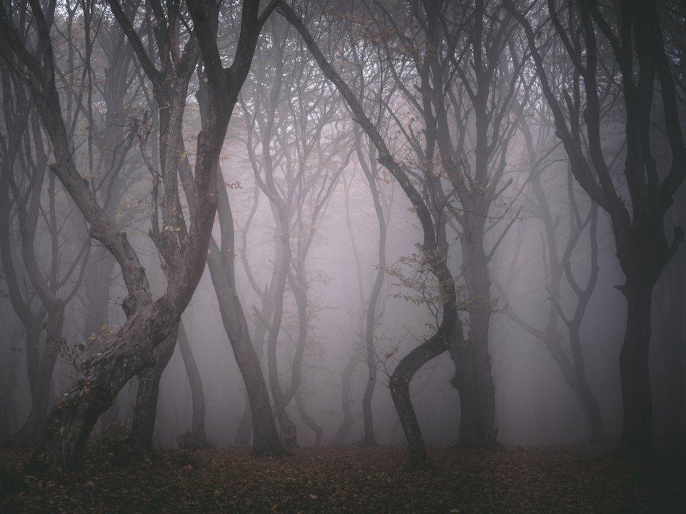 Лес Хойя Бачу