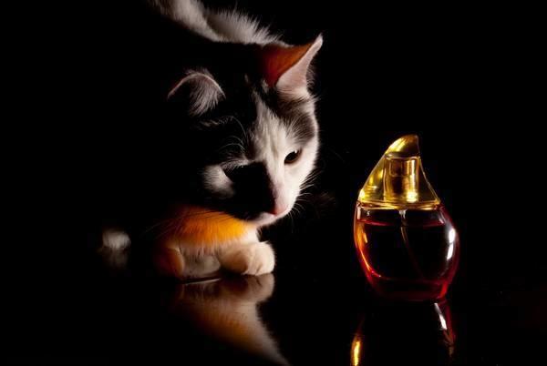 кошка и духи